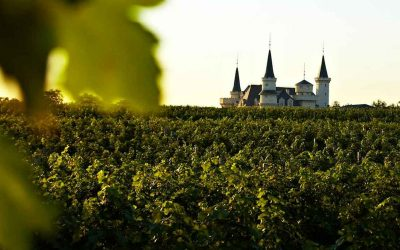 Building a Disney World for Wine